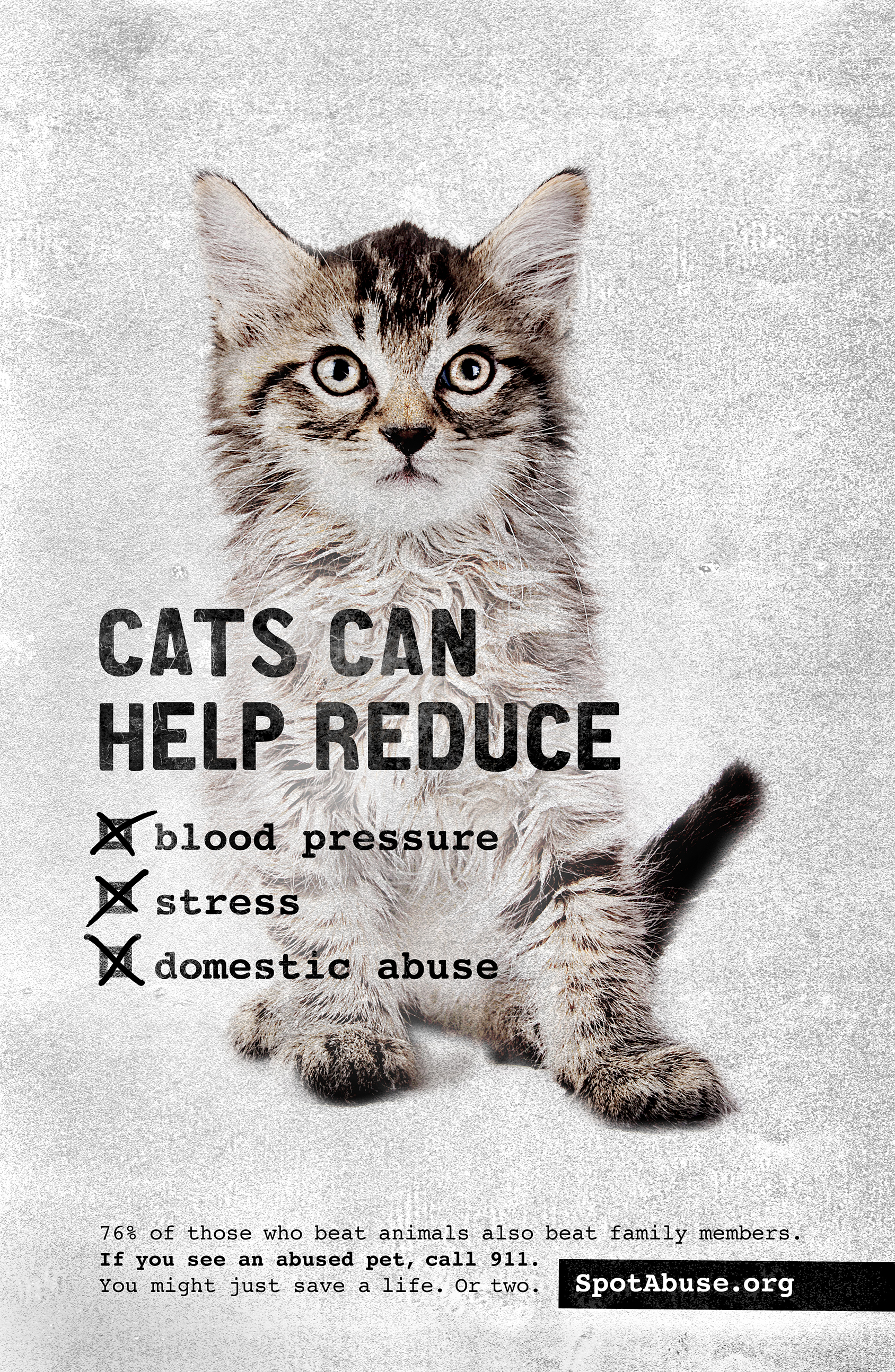 Animal abuse quotes cats